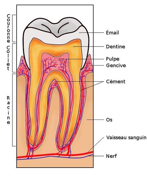 Dentiste Avon